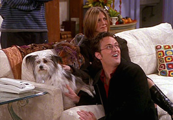 Image result for Friends the one where chandler hates dogs