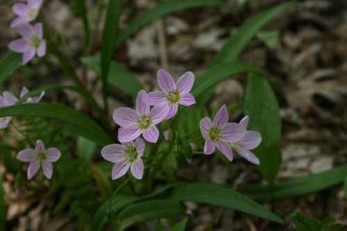 Common Plants Of Wisconsin