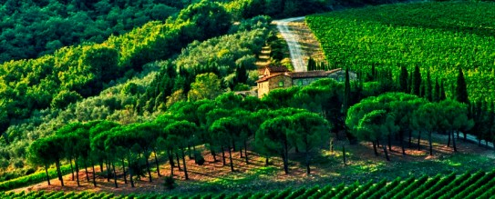 Late summer wine scenes from Tuscany
