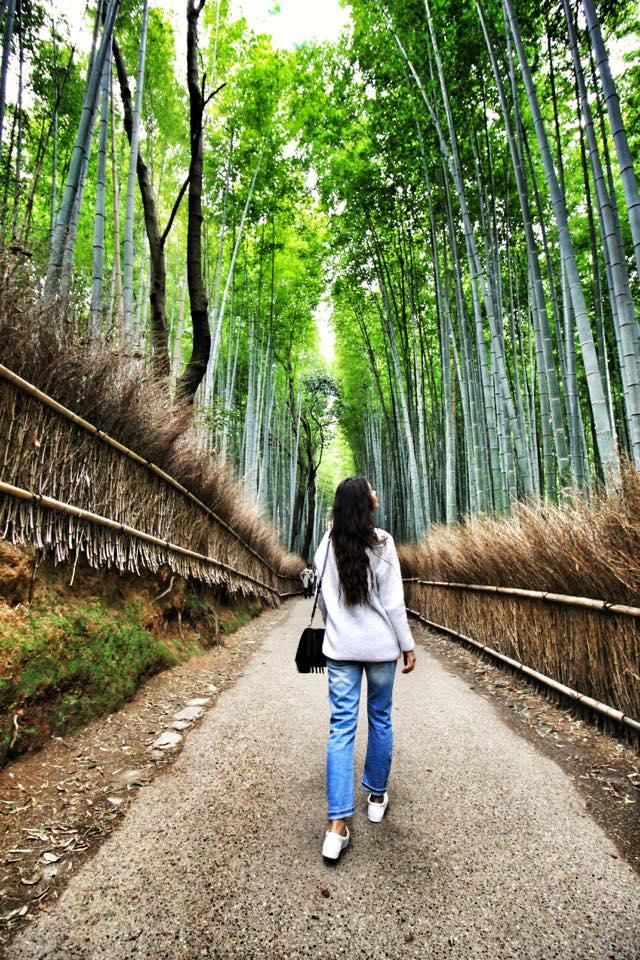 Padurea de Bambus