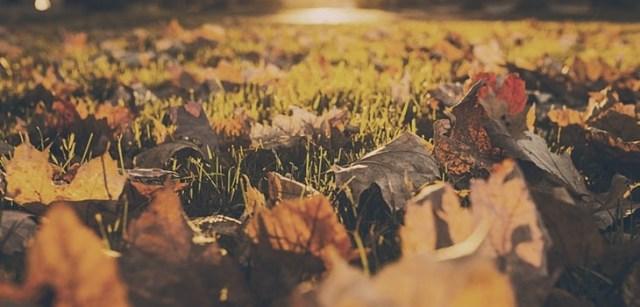 Apps para otoño