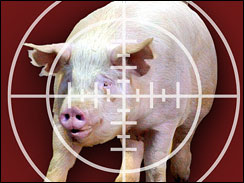 Army to use pigs in trauma training