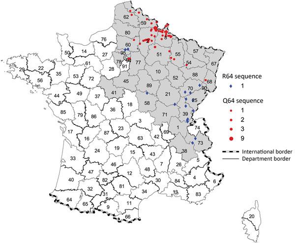 Figure 2 - Puumala Hantavirus Genotypes in Humans, France, 2012 ...