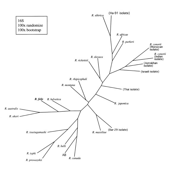Cladogram Quiz