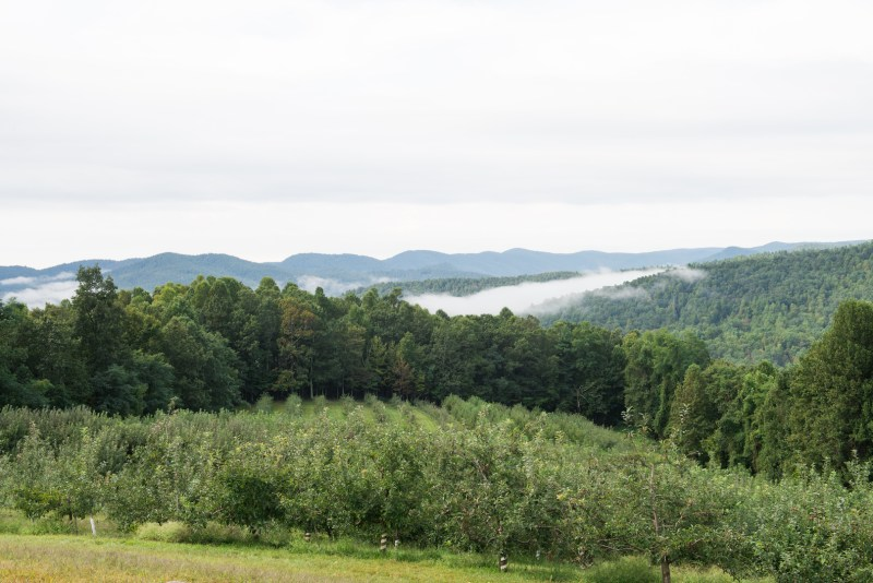 Picture of Sky Top apple orchard in the mountains. Numerous green trees with a foggy haze