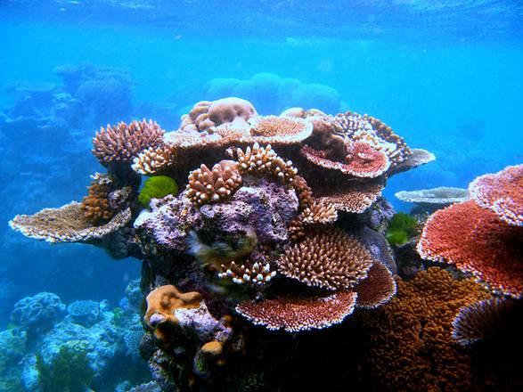 Ambiente: Iucn, al lavoro per maxi-riserva marina da record