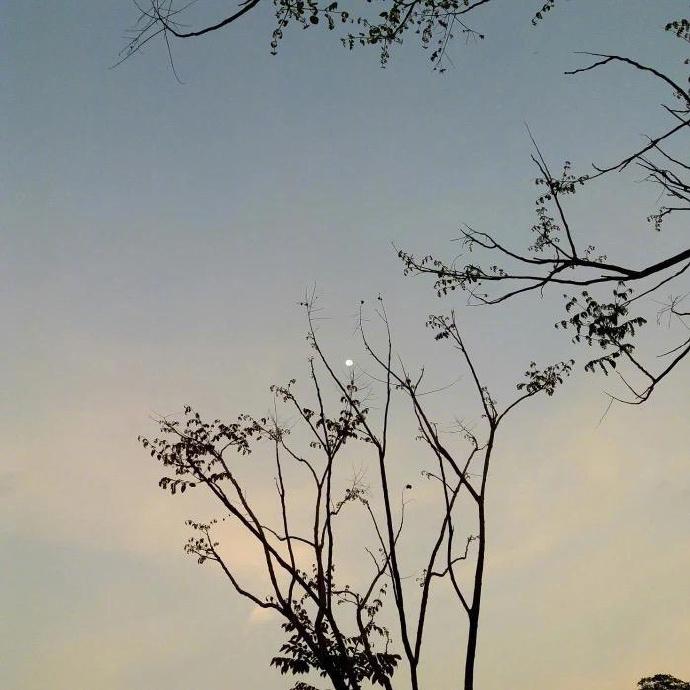 早安心语语录190524:你看日子山高水长,可谁和谁有来日方长