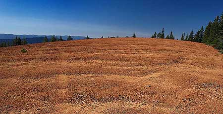 Another view of Red Hill's summit showing the criss-crossing ruts left by thoughtless OHVers.