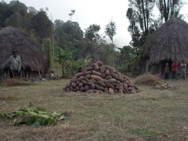 Sweet potatoes piled up ready for a harvest celebration. Goals You Achieve 8 Celebrate Your Achievements
