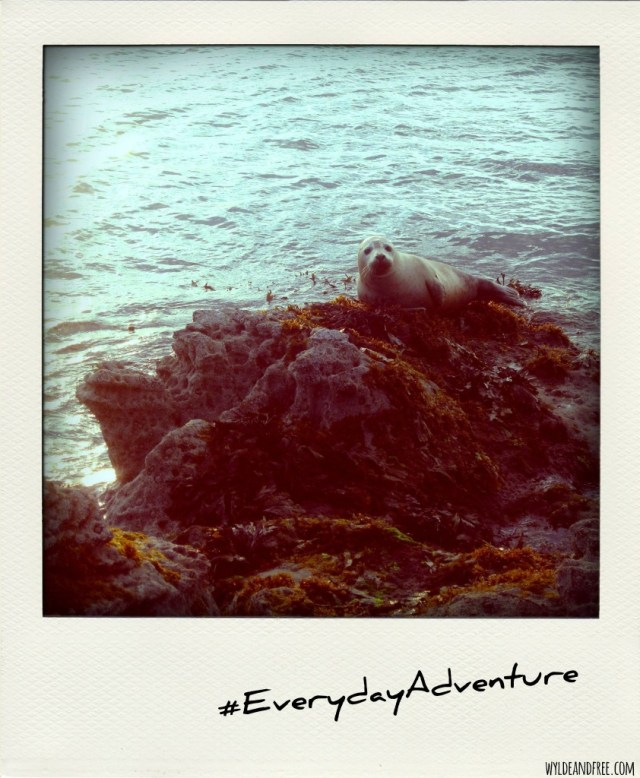 2015-07-17 everydayadventure
