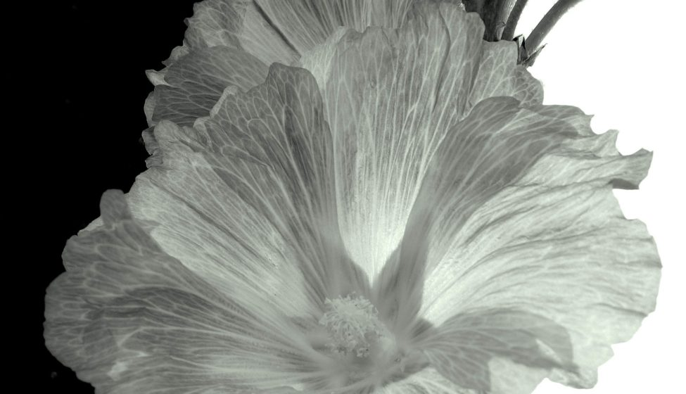 Flowers_BW (1 of 7)