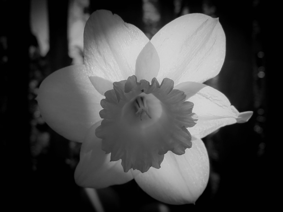 Flowers_BW (3 of 7)