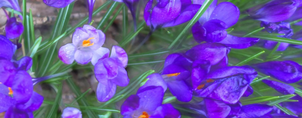 Sunday Serenity: Purples Haze