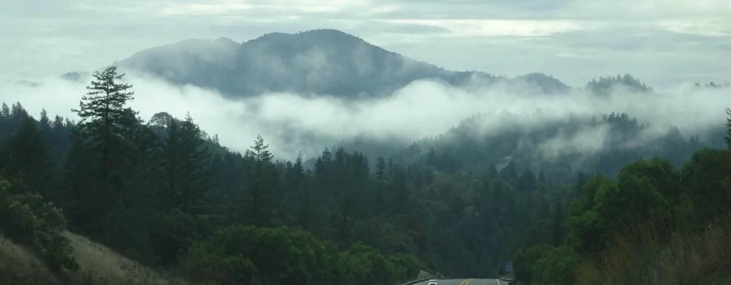 Redwoods State & National Park