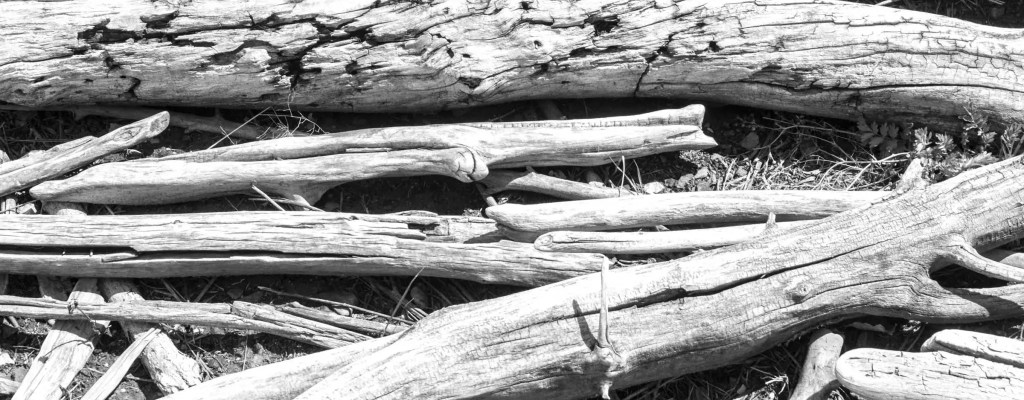Freaky Friday: Driftwood