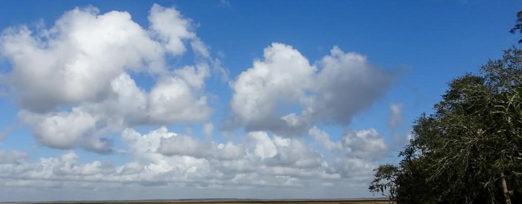 Sunday Serenity: Looking Up