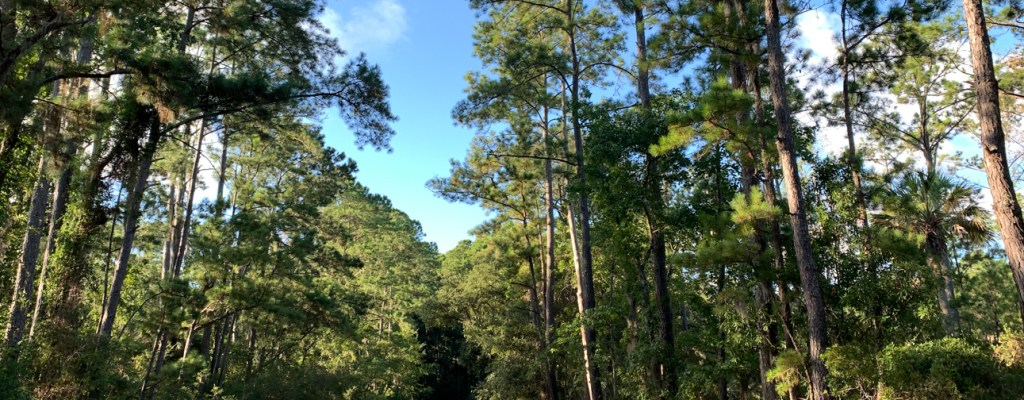 GA: Skidaway Island State Park