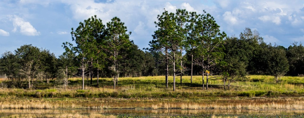 Review: Gold Head Branch State Park, FL