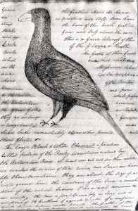 William Clark drew this picture of a greater sage grouse while on his famous voyage across the continent. (Missouri Historical Society