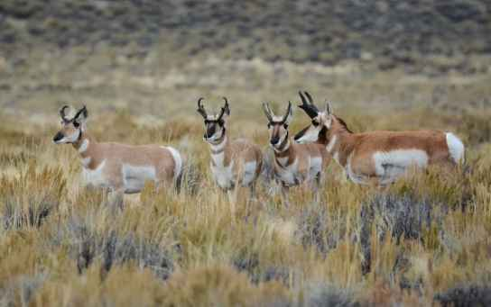 Seedskadee National Wildlife Refuge. (Mike Reinhart)