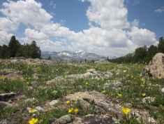 """""""Alpine wildflowers and Wind River Peak."""" (Steff Kessler, Lander)"""