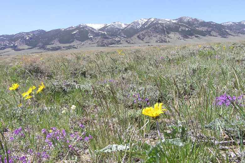 The Ferris Mountains Wilderness Study Area in south-central Wyoming is part of 758,044 acres now managed to preserve their roadless character, among other natural values. Wyoming county commissioners wonder whether it and other study areas should be reclassified. (U.S. Bureau of Land Management)