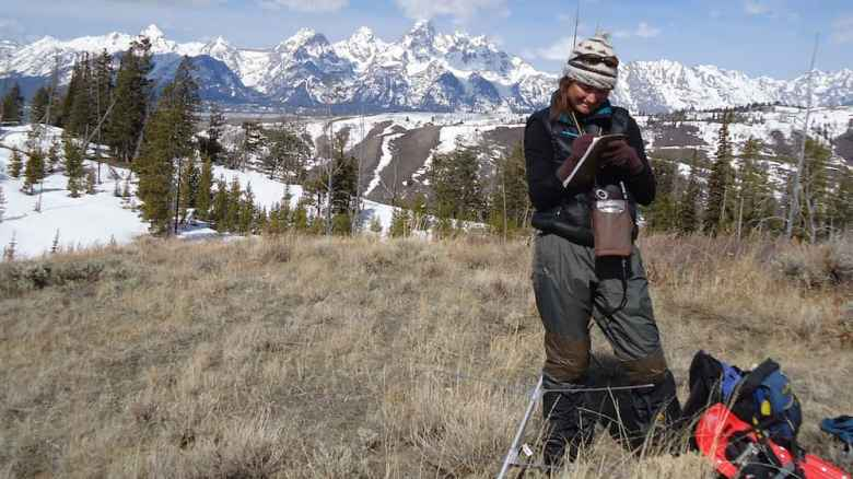 Taza Schaming's research in Wyoming's Bridger–Teton National Forest is the longest study ever conducted with individual Clark's Nutcrackers. (courtesy Cornell Lab of Ornithology)