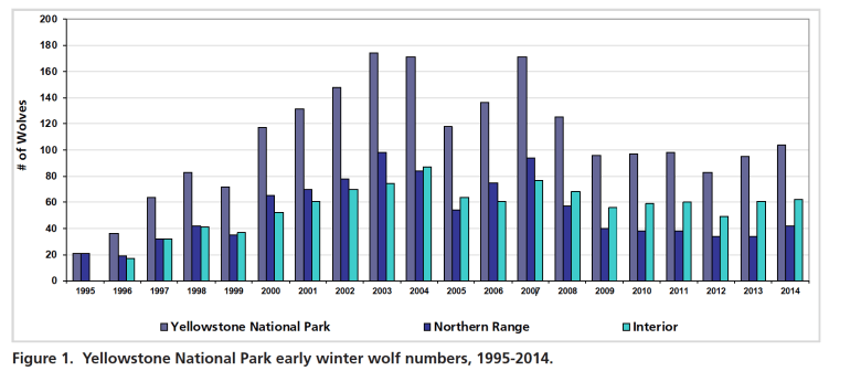 Wolf numbers in Yellowstone National Park have hovered around 100 animals in recent years. (Yellowstone National Park)