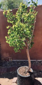 Shop Tree Bonsai - Amazon - Free 2-day Shipping w/ Prime                                         Ad                                                                                                                 Viewing ads is privacy protected by DuckDuckGo. Ad clicks are managed by Microsoft's ad network (more info).