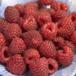 Heritage Raspberry