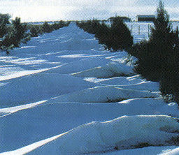 Snow-drifted lane