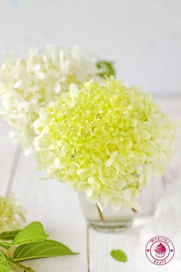 domowy kwiatki