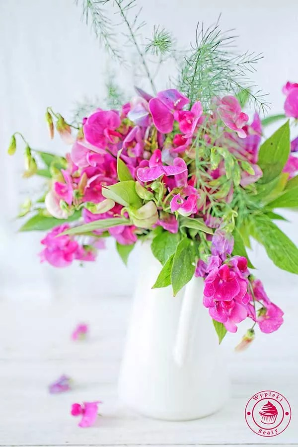 kwiaty pachnącego groszku w białym wazonie