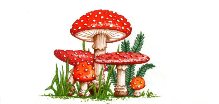 Muchomor czerwony – niesamowite właściwości muscymolu