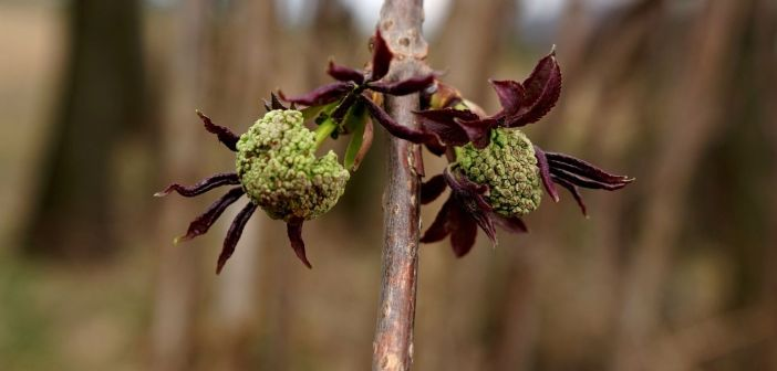 Wiosenna fotografia przyrodnicza [GALERIA]