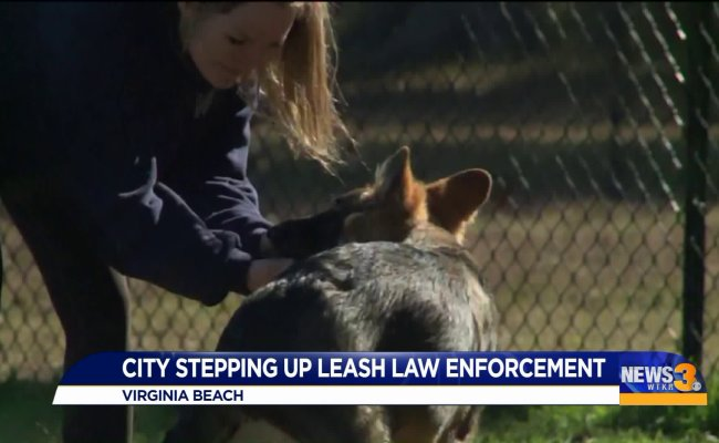 Virginia Beach Animal Control Reminding Residents To Keep Dogs On Leashes Stepping Up