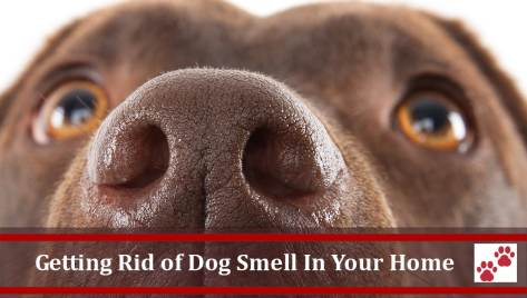 Professional pet odor removal service treatments for cat or dog urine and odors