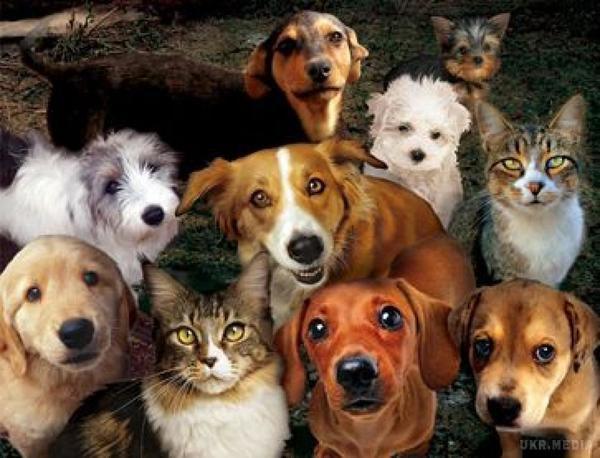 У Харкові стартував проект допомоги бездомним тваринам