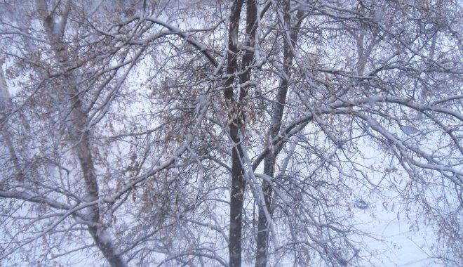 В Харківській області пішов перший сніг