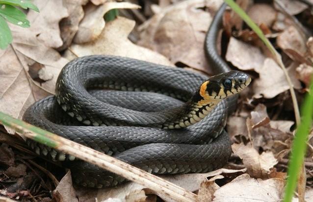 Харків'ян попереджають про змій
