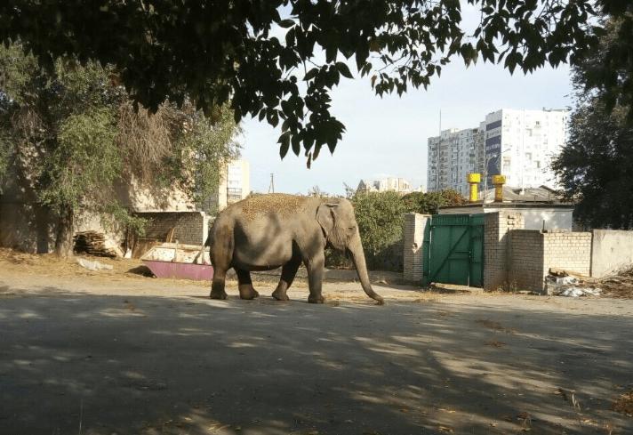 Вулицями міста гуляють лисиця і слон