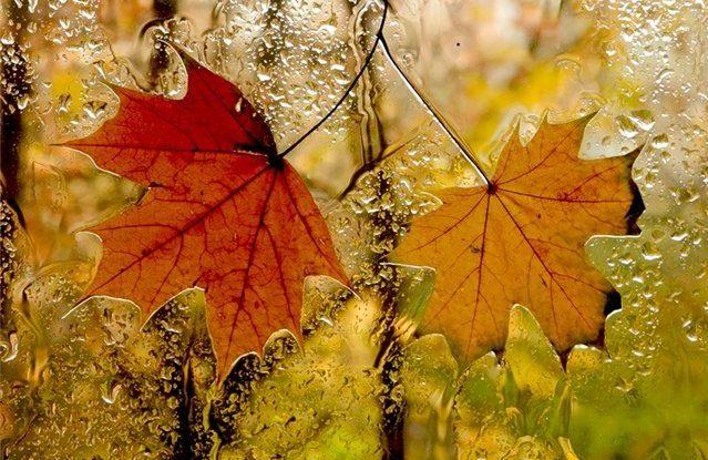 У Харкові настає прохолодна та дощова осінь