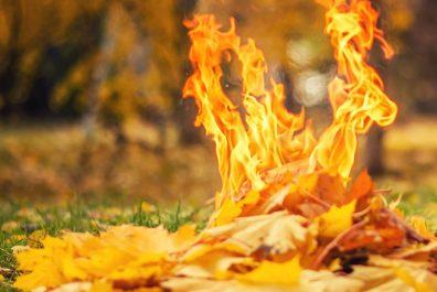 Burn_leaves