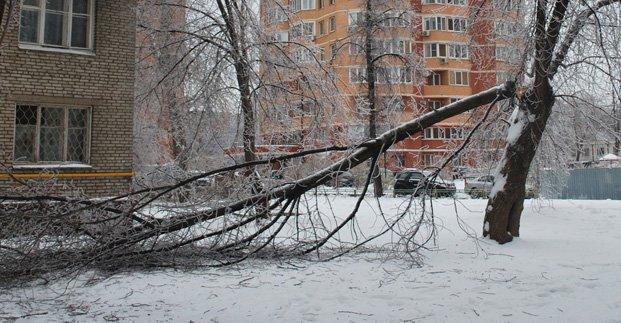 Через негоду у Харкові попадали дерева