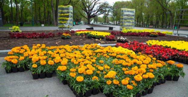 У місті розпочалася масштабна висадка квітів