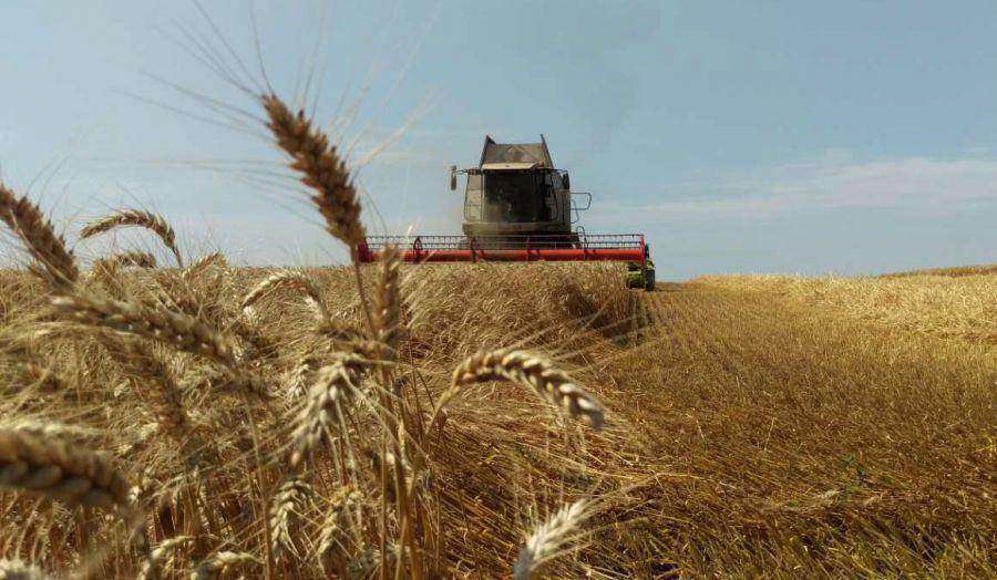 В Україні названо область-лідера з врожайності зернових культур