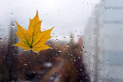 Closeup maple leaf on a glass