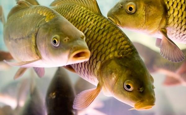 З 1 листопада в Україні заборонять ловити зимуючу рибу
