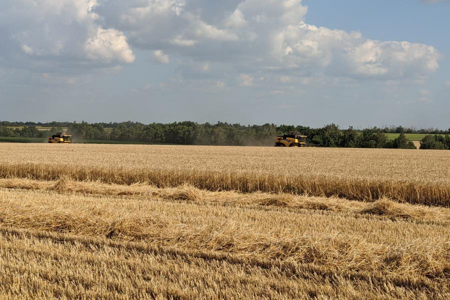 Зернових культур зібрали на 16% більше
