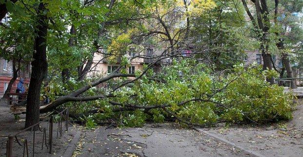У Харкові через негоду падають дерева